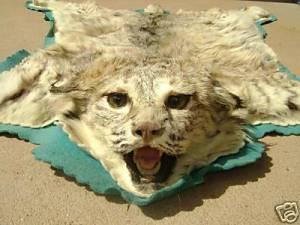 Yvonne's Bobcat